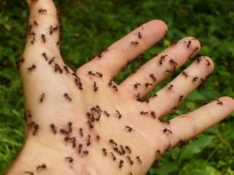 النمل مع جسم الانسان