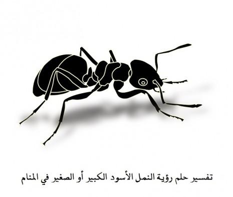 تفسير حلم رؤية النمل الاسود كبير أو صغير في المنام