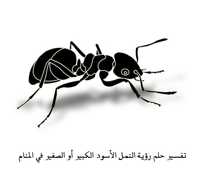 مهدئ رد الصياغة رؤية النمل في المنام على الفراش Sjvbca Org