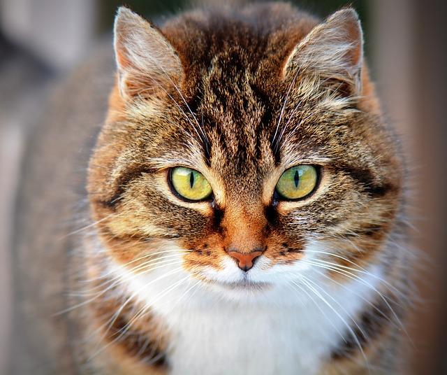 تفسير رؤية حلم قط اسود بالمنام لابن سيرين Dream Black Cat