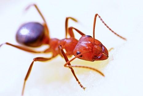 رؤية النمل الاحمر في حلم المنام