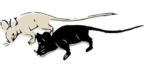 فأر ابيض و فأر اسود