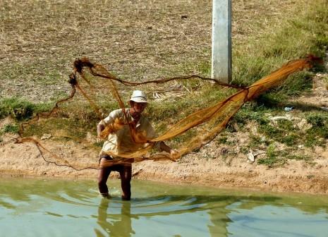 صيد السمك في الشبكة