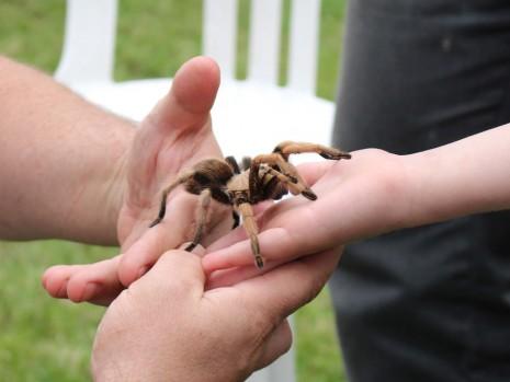 يمسك عنكبوت بيده في الحلم