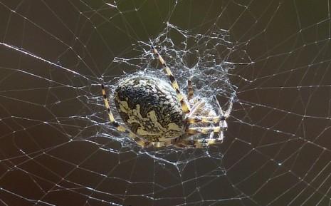عنكبوت ميت في الحلم