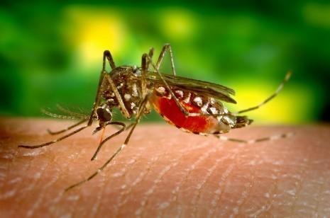 علاج فيروس زيكا