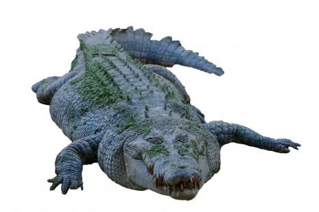 رؤية التمساح في الحلم