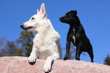 تفسير رؤية الكلب الابيض والاسود في الحلم
