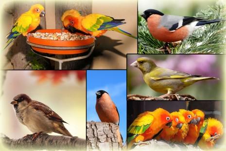 تفسير رؤية العصافير الملونة في الحلم