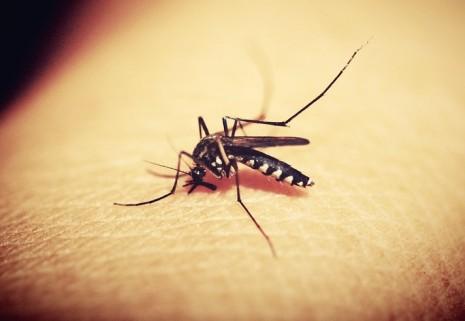 طرق القضاء على الناموس والتخلص من البعوض نهائيا