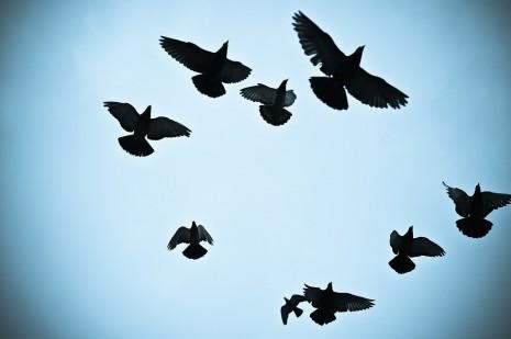 رؤية صيد طيور الحمام في المنام
