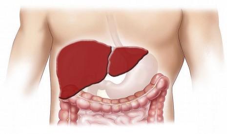 علاج فيروس الكبد سي بالادوية والاعشاب