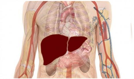 علاج التهاب الكبد بفيروس سي وطرق الوقاية