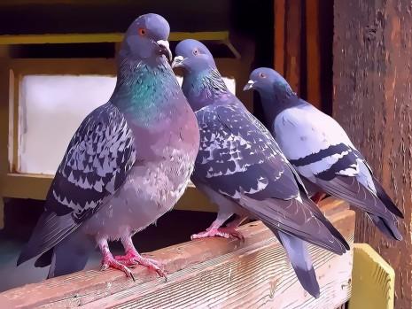 تفسير حلم رؤية الحمام والعصافير والطيور الملونة في المنام
