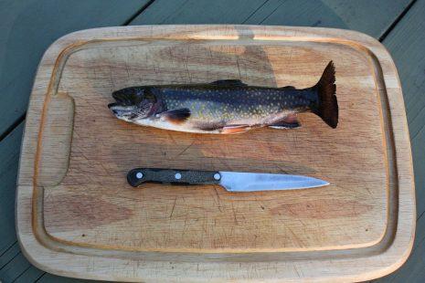 خطوات وطريقة تنظيف السمك بسهولة في المنزل