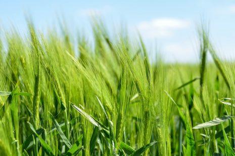 تفسير حلم رؤية الزرع الأخضر