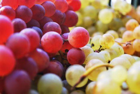 تفسير حلم رؤية اكل العنب أو شجرة العنب في المنام