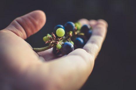 تفسير حلم رؤية العنب في المنام