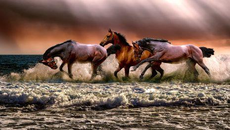 تفسير حلم رؤية الحصان الأبيض أو الخيل الاسود في المنام