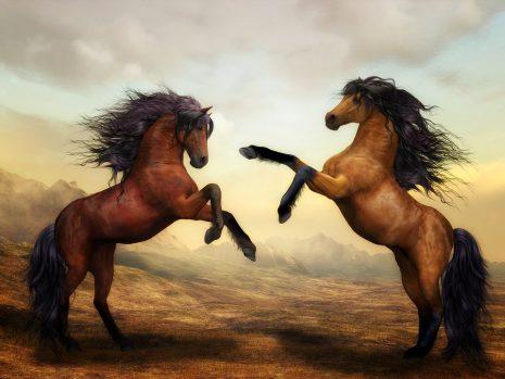 horsesتفسير حلم رؤية الحصان أو الخيل في المنام