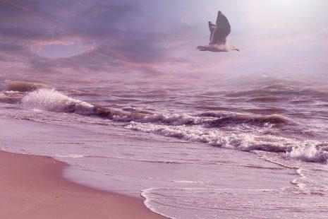 رؤية البحر في المنام للعزباء sea dream