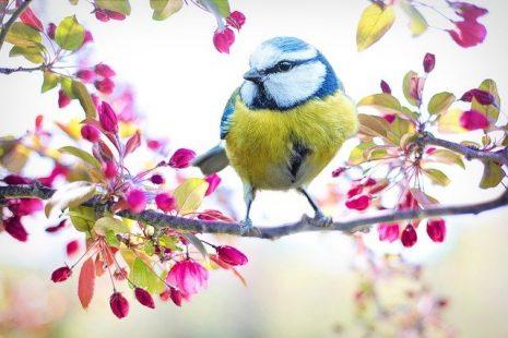 رؤية العصافير الملونة في المنام